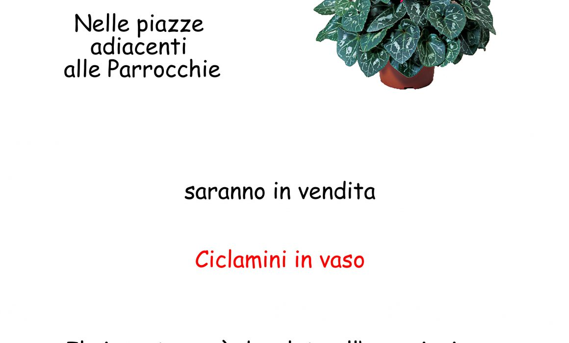 news_ciclamini